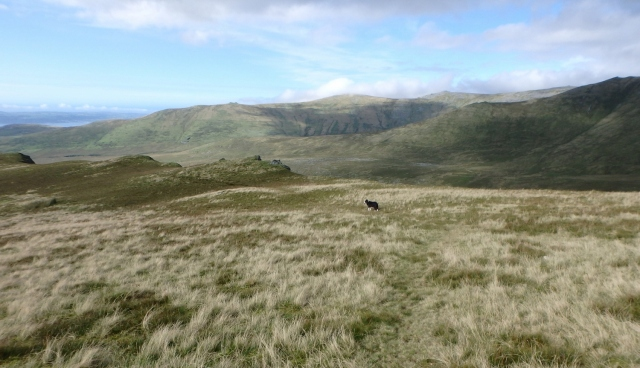 Heading for the ridge of Mynydd Du above the Afon Llafar