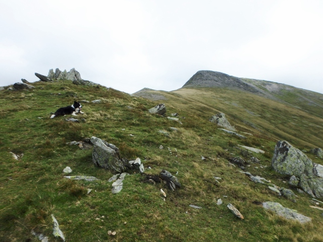 Border Collie 'Mist' on the first peak heading towards Yr Elen