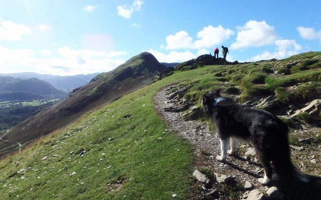 Border Collie 'Mist' checking out the route ahead