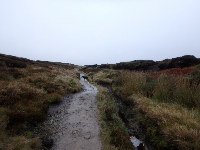 …. but slowly starts to merge in with the moors