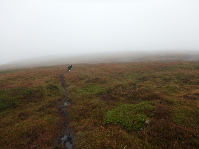 …. but me and Border Collie 'Mist' are heading west towards Higher Shelf Stones!