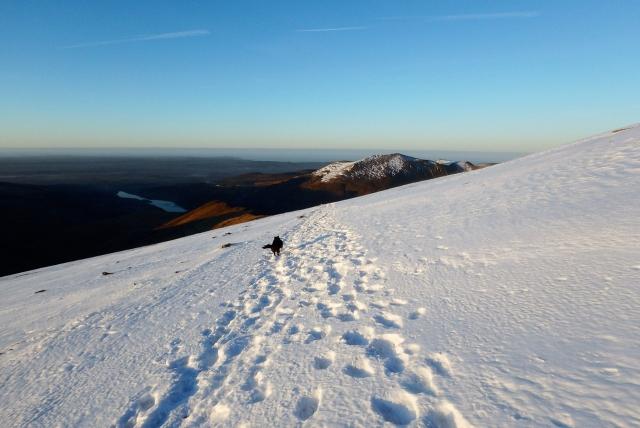 'Mist' enjoying a run on the snow-covered Llanberis Path