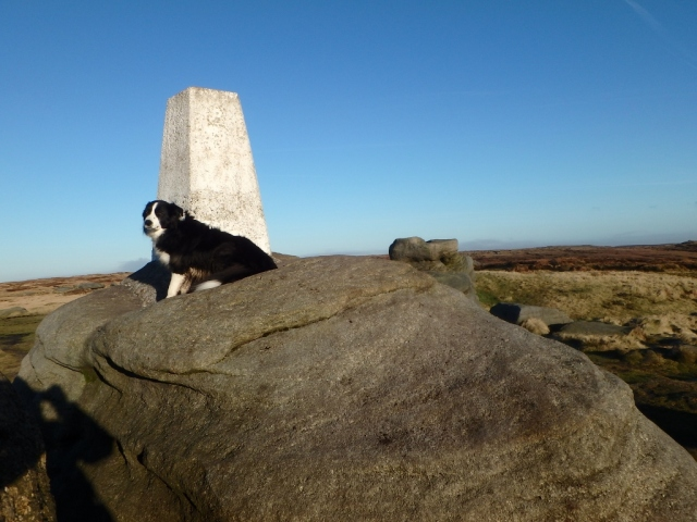 …. with Border Collie 'Mist' posing as usual