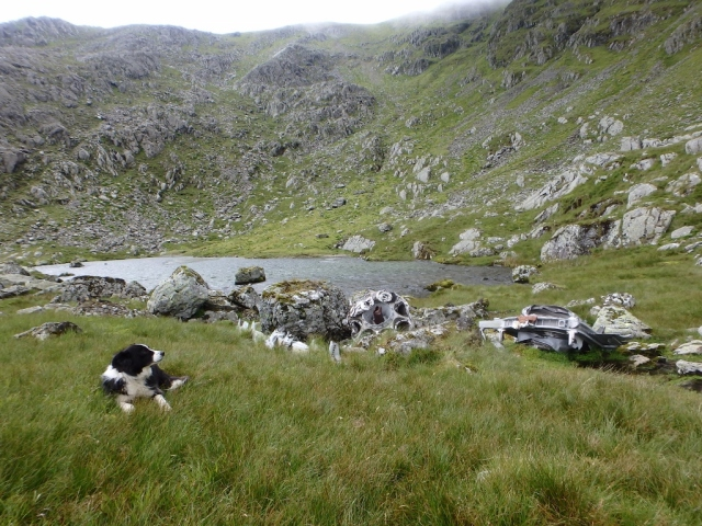 Border Collie 'Mist' at Llyn Llyffant