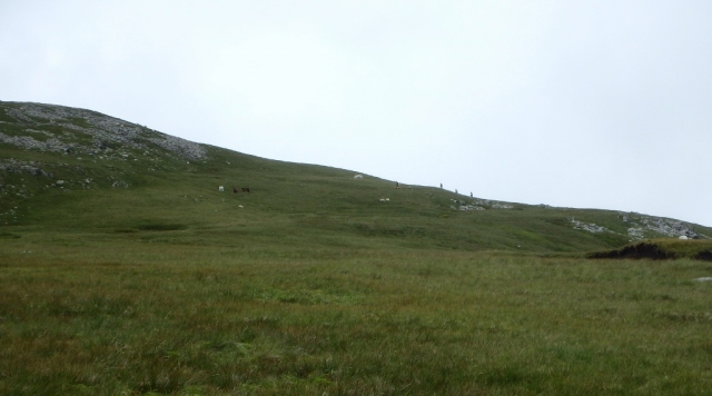 Small group of Carneddau ponies and the only humans I saw all day