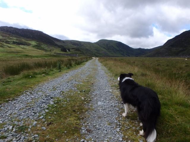 Setting out towards Cwm Eigiau